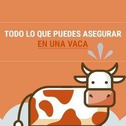 ¿Por qué asegurar a una vaca?